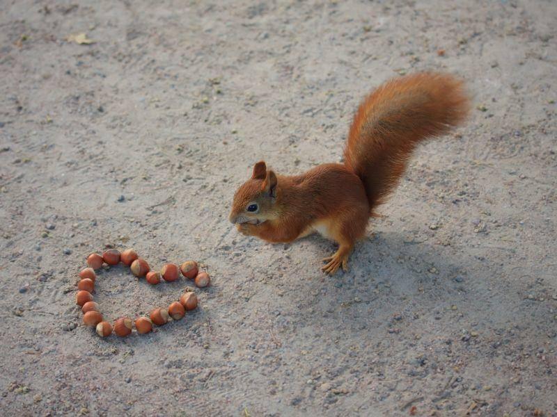 Ein Herz für Eichhörnchen, das hat doch fast jeder, oder? – Bild: Shutterstock / Aleksandr Kazakevich