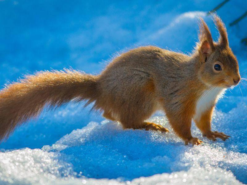 Im Schnee spielen, das ist schön! – Bild: Shutterstock / Michael Heward