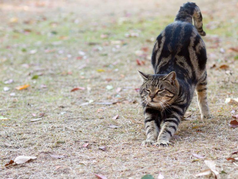 Und Strecken! Eine getigerte Katze genießt den Tag – Bild: Shutterstock / Seiji