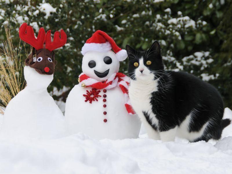 Draußen toben! Das ist zu Weihnachten besonders schön, findet diese Katze – Bild: Shutterstock / Bildagentur Zoonar GmbH