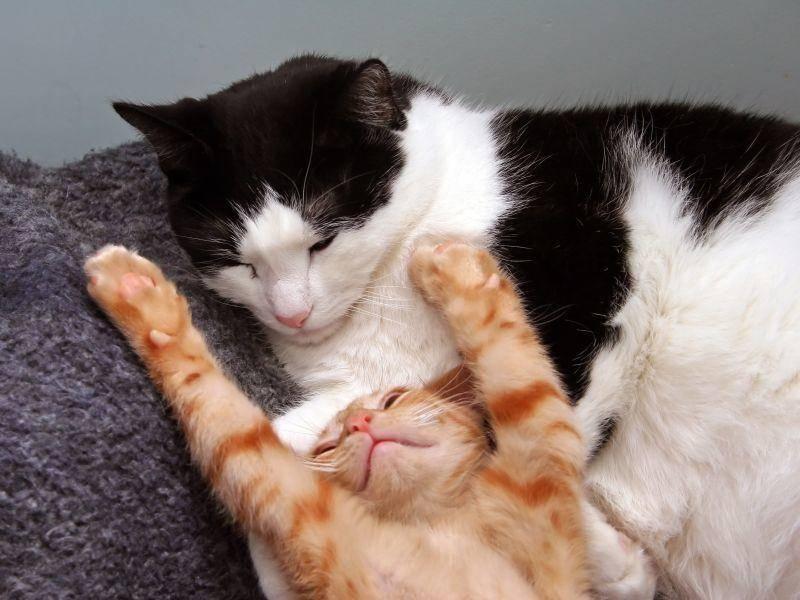 Wo man sich noch gut strecken kann: Bei seinem besten Katzenkumpel! – Bild: Shutterstock / Karl R. Martin