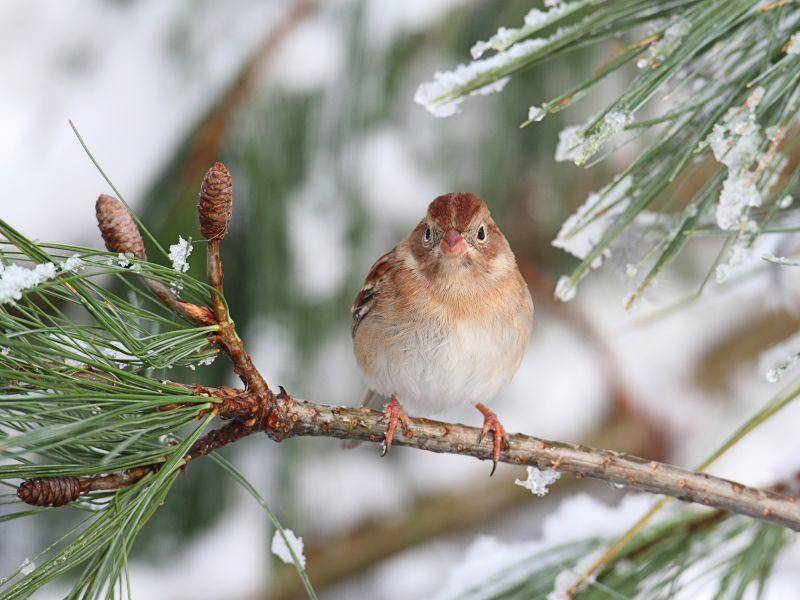 Ein Spatz genießt die Aussicht und das Winterwetter – Bild: Shutterstock / Steve Byland