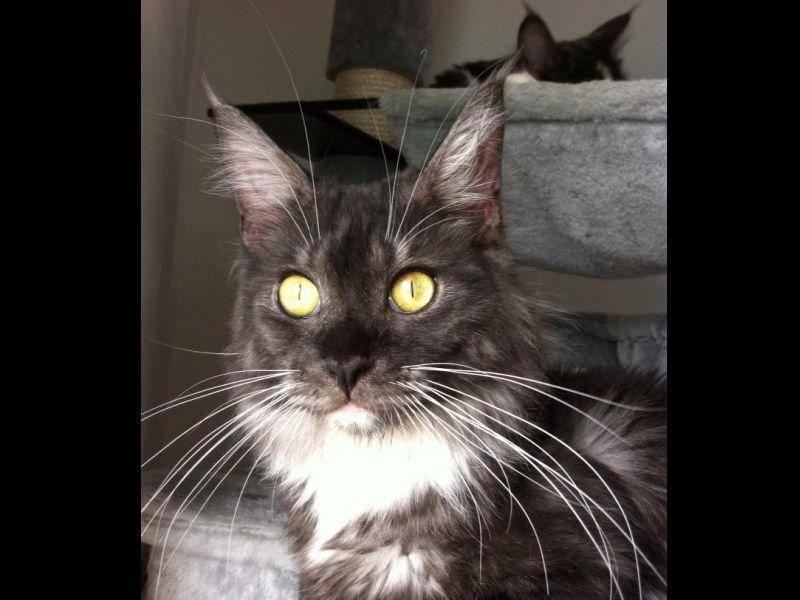 Das ist Smokey. Ihr bester Freund und Mitbewohner. – Bild: Claudia Plesser