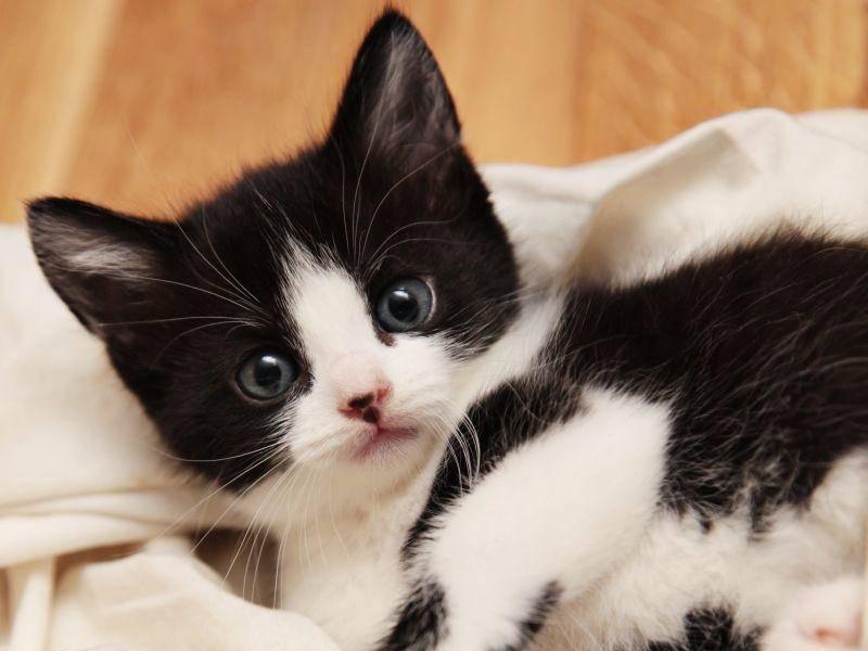 """Platz 4: Der Katzenname """"Simba"""" steht nicht nur niedlichen Tierkindern gut – Bild: Shutterstock / Foonia"""