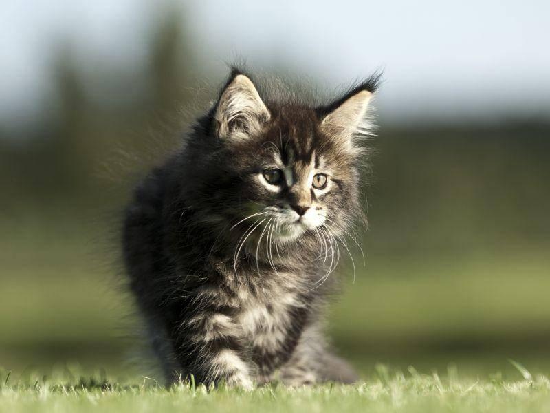 Platz 6: Kurz, knapp und schön: Der Katzenname Max – Bild: Shutterstock / Okeanas