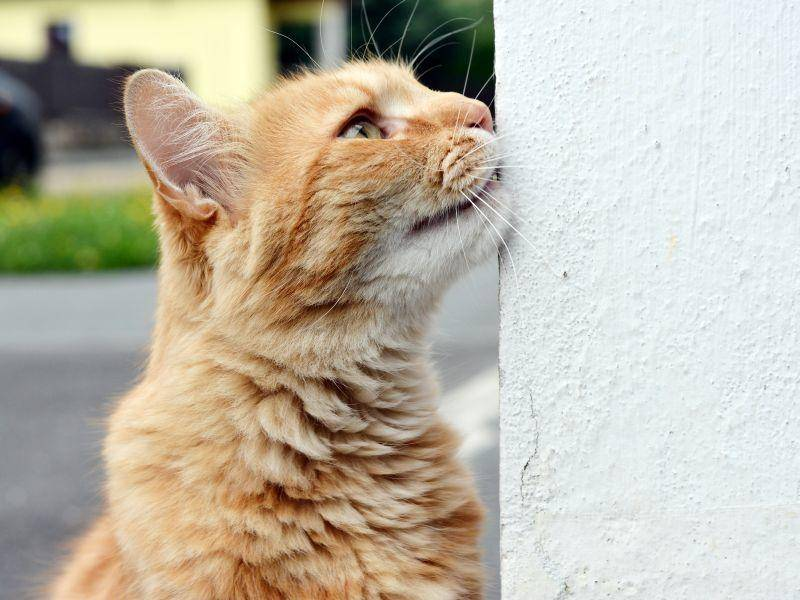 Platz 7 geht 2013 an den hübschen Katzennamen Sammy! – Bild: Shutterstock / DavidTB