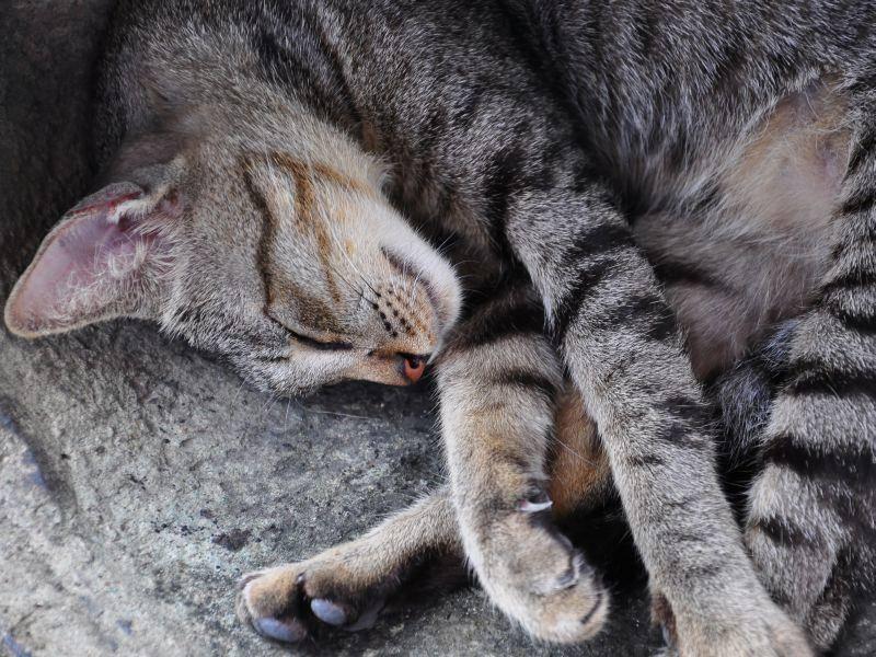 Platz 8: Der klassische Katzenname Moritz hat auch im Jahr 2013 viele begeistert – Bild: Shutterstock / Smokedsalmon