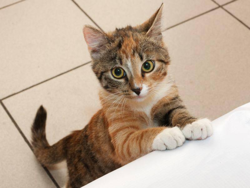 Platz 9: Rocky ist ein schöner Katzenname für kleine Racker und große Abenteurer – Bild: Shutterstock / hannadarzy