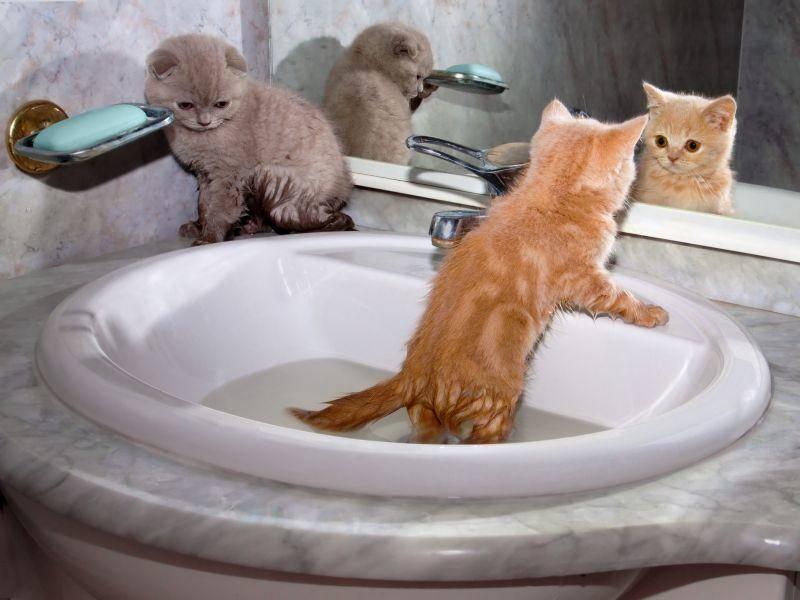 Es gibt sooo viel zu entdecken für junge Britisch Kurzhaar Katzen – Bild: Shutterstock / vvvita