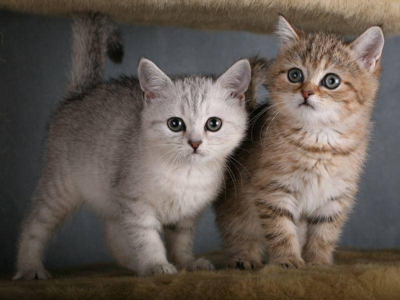 Diese kleinen Prachtkerle haben besonders schöne Farben – Bild: Shutterstock / Onishchenko Natalya