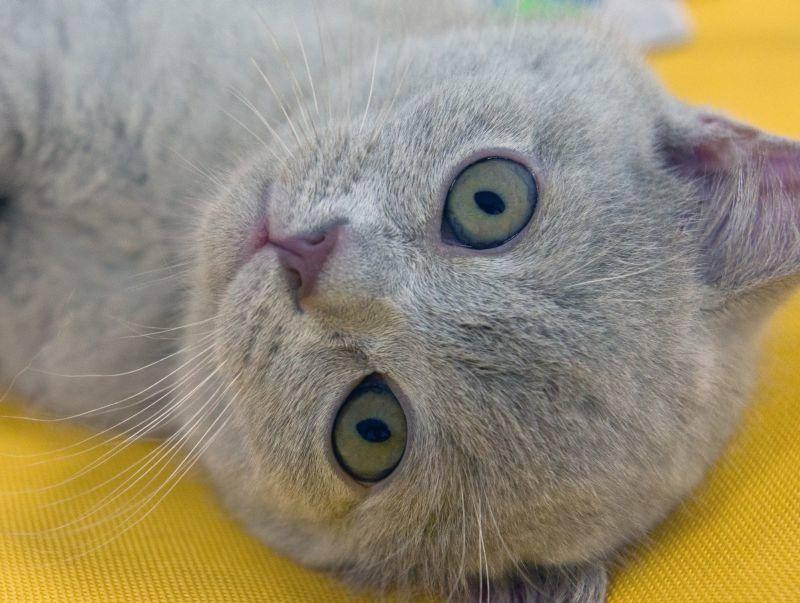 """Der Allzeit beliebte Katzenname """"Mimi"""" folgt auf Platz 6 – Bild: Shutterstock / a_v_d"""