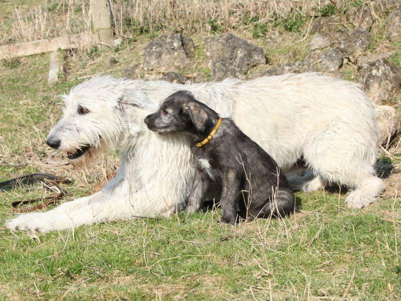 Zusammen die Aussicht genießen: Hundemutter und ihr Welpe – Bild: Shutterstock / Zuzule