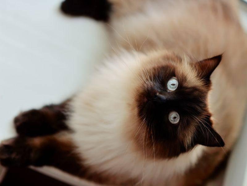 """Und den dritten Platz holt sich der süße Katzenname """"Mia"""" – Bild: Shutterstock / Alekuwka"""
