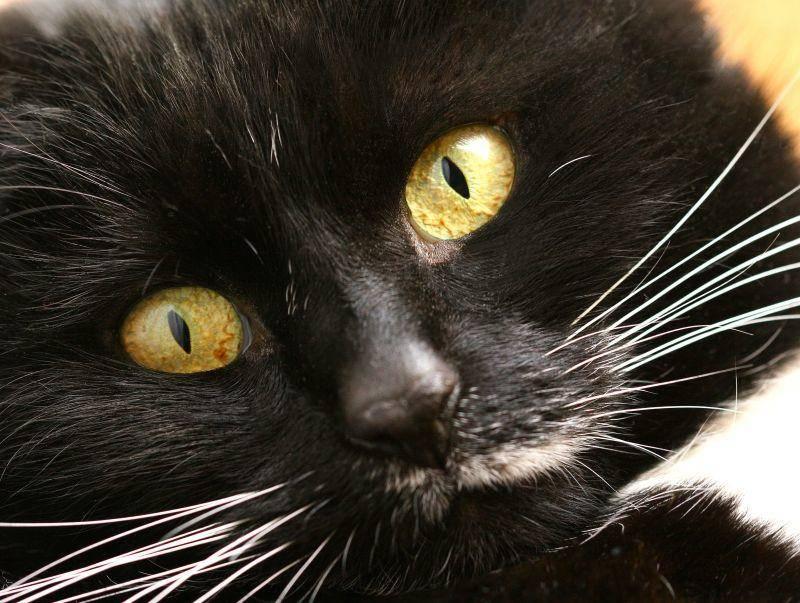 """""""Luna"""" steht schon seit Jahren auf Platz 2 der beliebtesten Katzennamen – Bild: Shutterstock / gorra"""