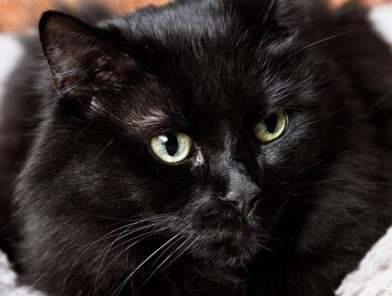 """Platz 9 der beliebtesten Katzennamen gehört """"Maja"""" – Bild: Shutterstock / Wollertz1"""