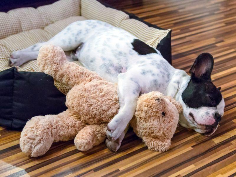 Und diese hier ist sooo müde – Bild: Shutterstock / Patryk Kosmider