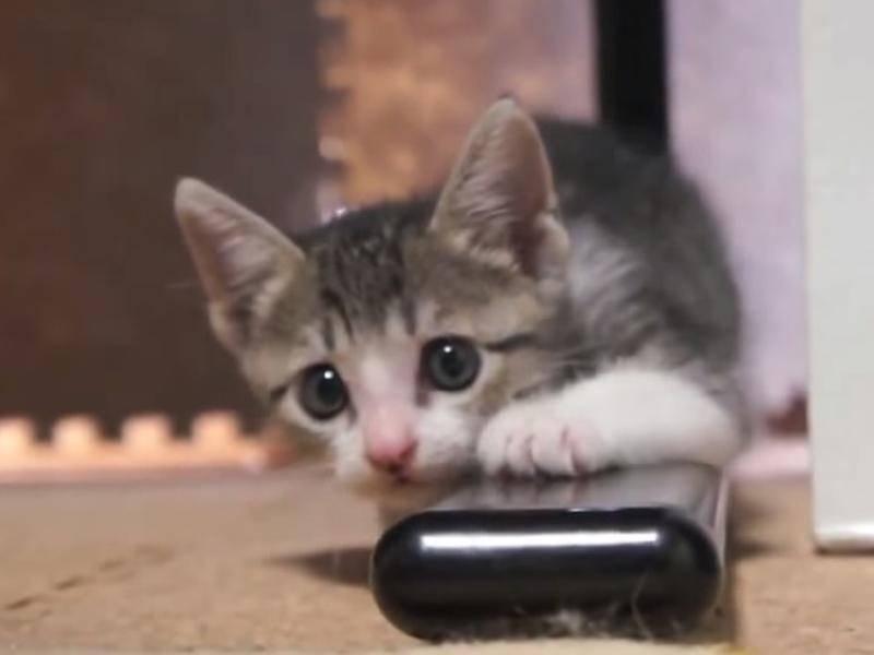 Süßes Katzenbaby entdeckt die Welt – Bild: Youtube / Anna Maria
