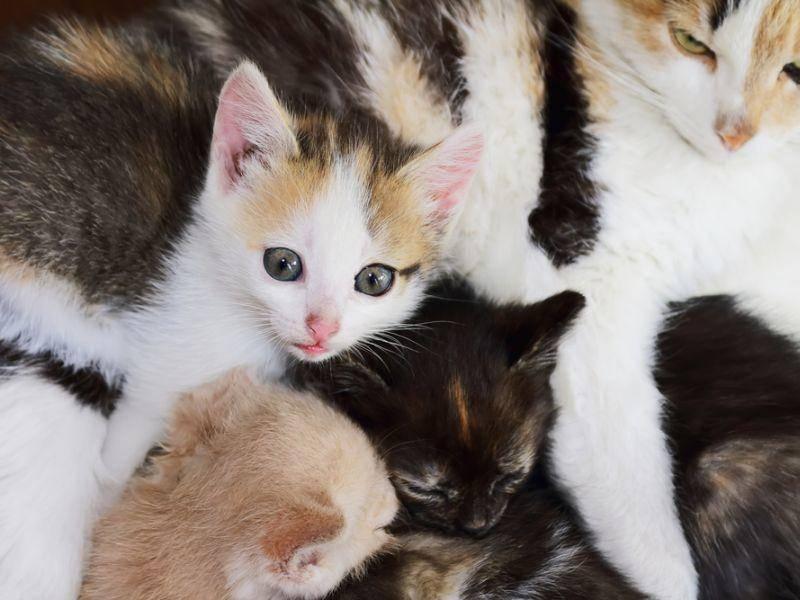 Sehr praktisch: Diese Katzenbabys kann man nicht verwechseln! – Bild: Shutterstock / s7chvetik