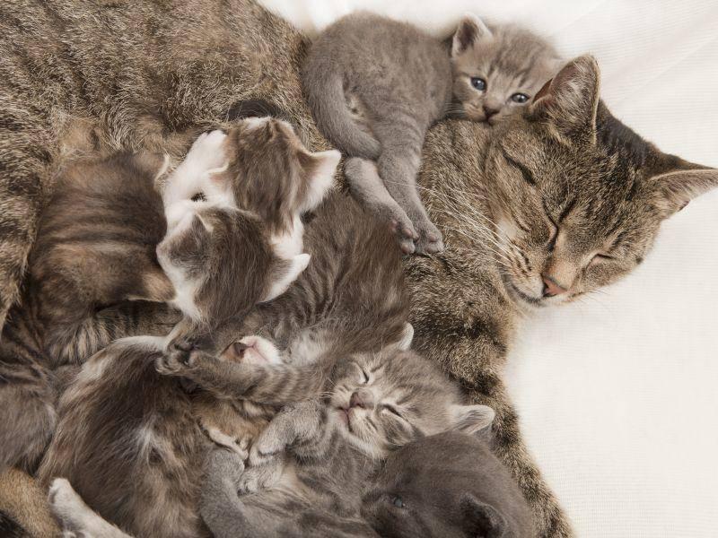 Na, wie viele Katzenbabys sind auf diesem Bild zu sehen? – Bild: Shutterstock / Purple Queue