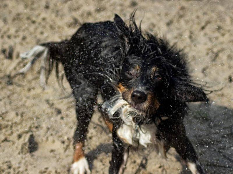 Und schütteln! Wie man sieht, hat Henry Spaß am Wasser!