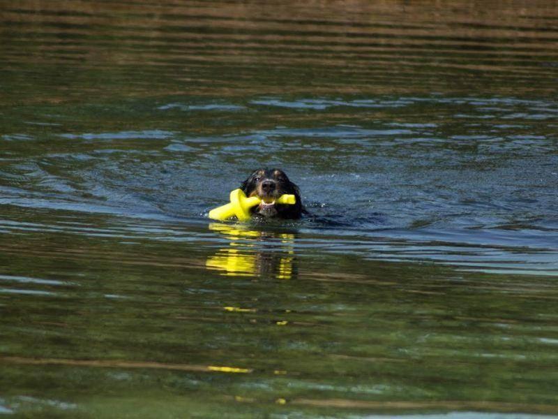 Sein Spielzeug aus dem Wasser zu holen ist für ihn nicht nur eine Selbstverständlichkeit, sondern ein Riesenspaß!