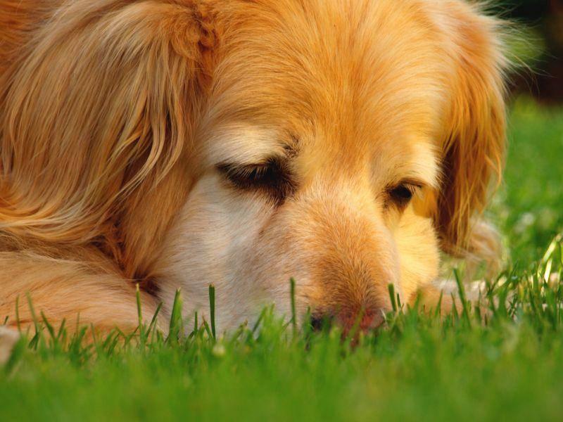 Ganz nah: Ein schöner Hund, oder? – Bild: Shutterstock / Kesu