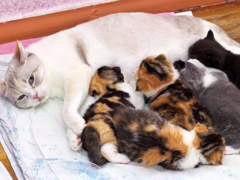 Einfarbige Katzenmama und eine kunterbunte Bande Kitten – Bild: Shutterstock / ESOlex