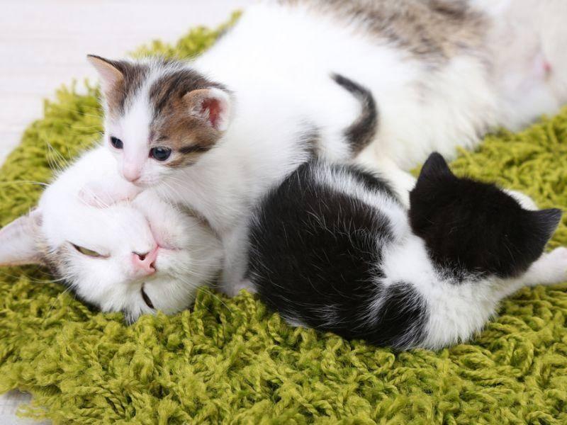 """""""Auf dem Teppich kuscheln? Nein, die Katzenmama ist viel gemütlicher!"""" – Bild: Shutterstock / Africa Studio"""