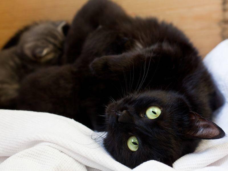 So süß und rabenschwarz: Diese Katzenbabys sind gut versteckt – Bild: Shutterstock / AnnaIA