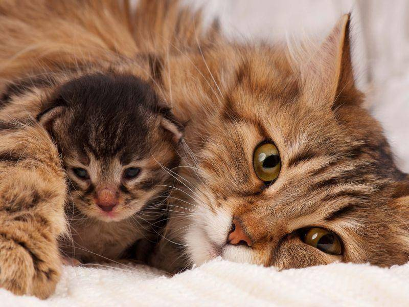 Und dieser tierisch süße Katzenwinzling wird von seiner Katzenmutter beschützt – Bild: Shutterstock / Lubava