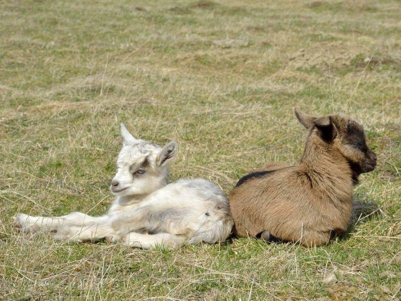 Und natürlich mit ihren Geschwisterchen in der Sonne liegen – Bild: Shutterstock /Schubbel