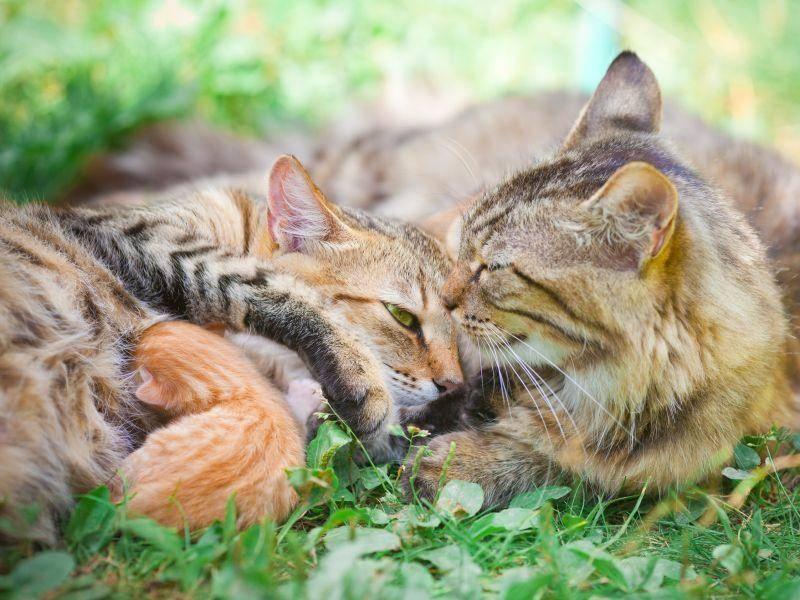 In der Sonne ist's am Schönsten, findet diese Katzenfamilie – Bild: Shutterstock / vvvita