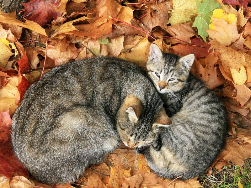 Diese beiden süßen Samtpfoten frieren sicher auch bei kühlen Herbsttemperaturen nicht – Bild: Shutterstock / Asta Plechaviciute