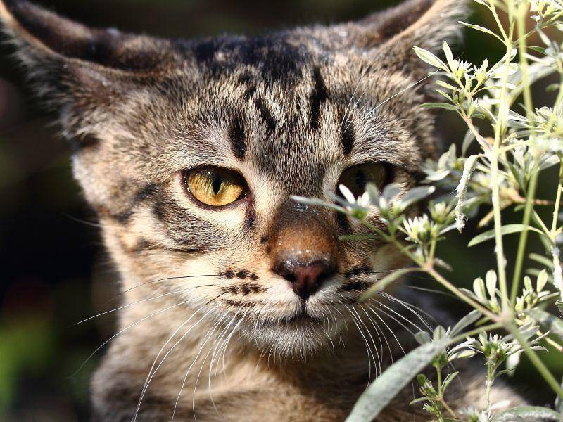 Aufmerksam und tierisch schön: Junge Bengal-Katze auf Tour – Bild: Shutterstock / Namart Pieamsuwan