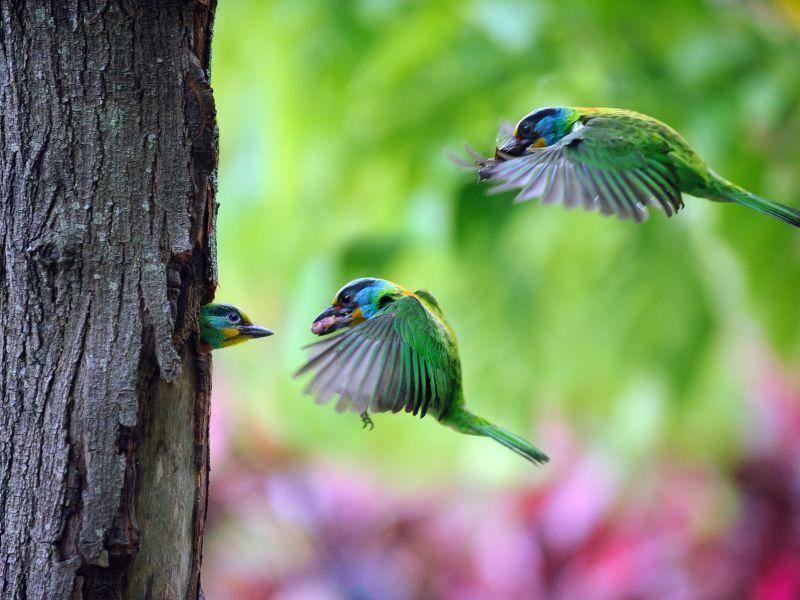 Teamwork unter ein paar bildschönen Kolibris – Bild: Shutterstock / Top Photo Corporation
