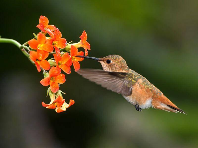 Passt farblich perfekt: Der letzte süße Kolibri in unserer Bildergalerie – Bild: Shutterstock / Peter Dang