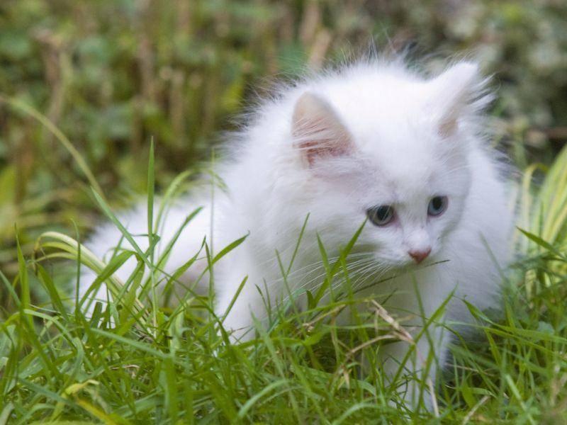 """""""So, ich mach dann mal meinen ersten kleinen Ausflug ..."""" Süße Norwegische Waldkatze auf Tour! – Bild: Shutterstock / hosphotos"""