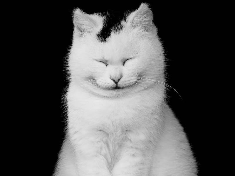Bei der süßen Samtpfote möchte man doch glatt mitgrinsen! – Bild: Shutterstock / Masyle