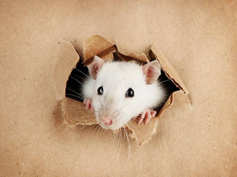 Kuckuck, kleine Maus! – Bild: Shutterstock / Africa Studio