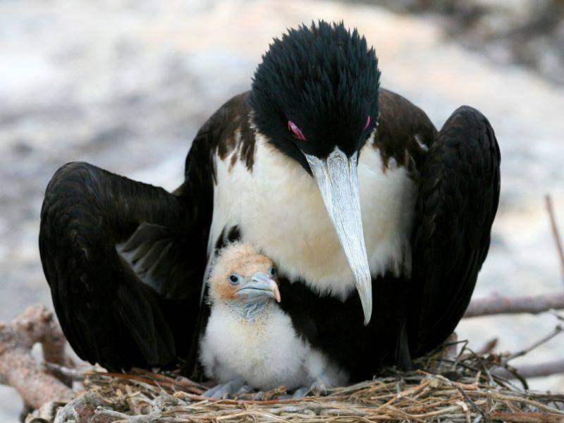 Vogelmama beschützt ihr Küken – Bild: Shutterstock / Stacy Funderburke