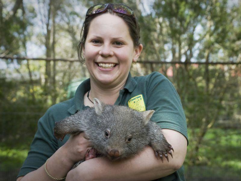 Wer würde nicht gern mal mit einem Wombat kuscheln? – Bild: Shutterstock / Brooke Whatnall