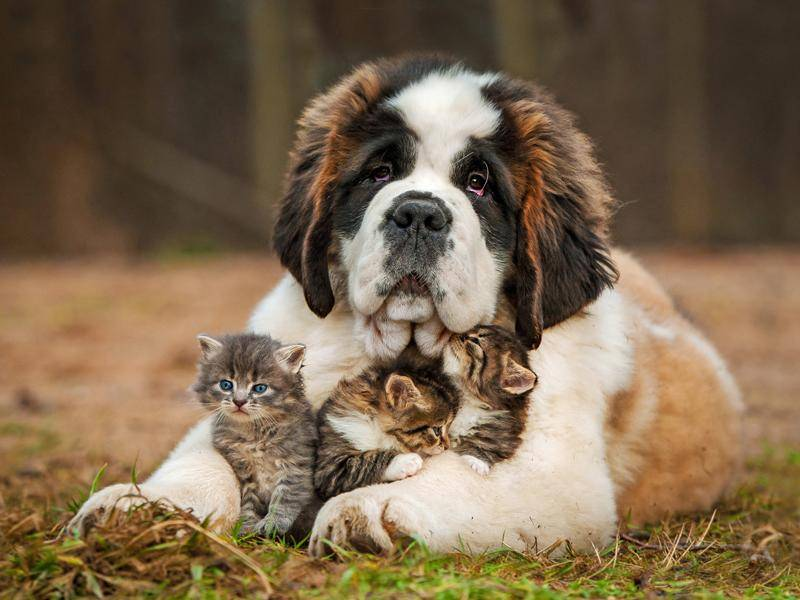 Sie haben einen ausgeprägten Beschützerinstinkt – Bild: Shutterstock / Rita Kochmarjova