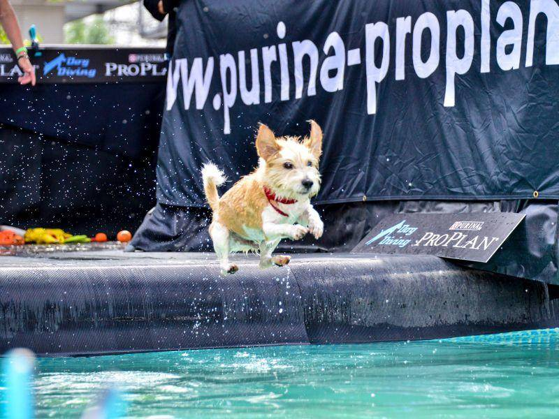 Dog Diving & Disc Dog für sportliche Hunde