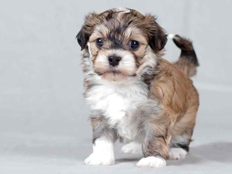 Dieser kleine Fratz ist gerade mal sechs Wochen alt – Bild: Shutterstock / Sandra Huber