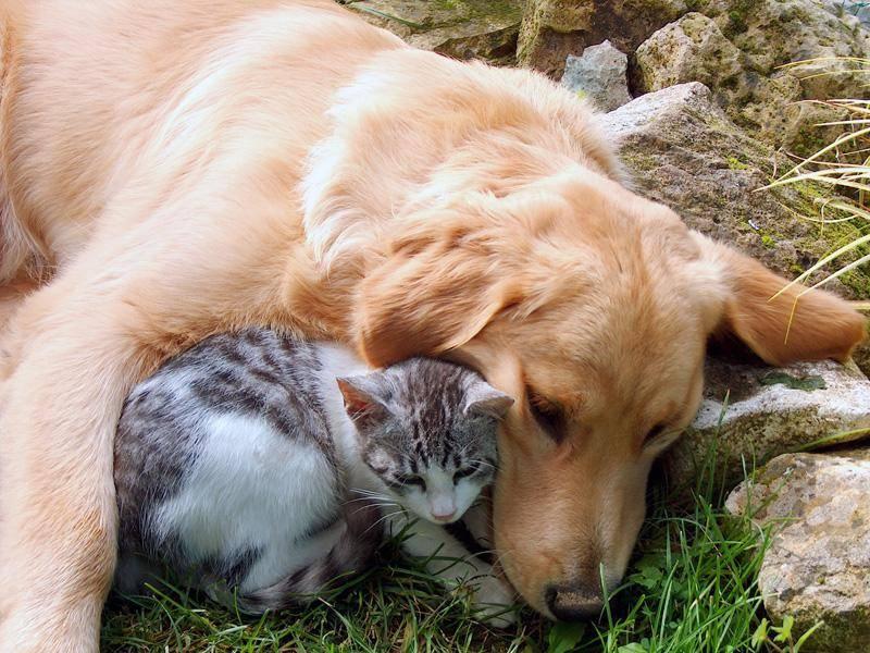 Einige Samtpfoten verstehen sich auch mit Hunden bestens – Bild: Shutterstock / M.M.