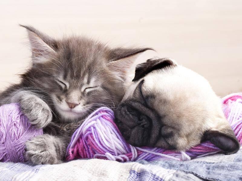 Auch mit anderen Freunden kuschelt es sich schön – Bild: Shutterstock / Liliya Kulianionak