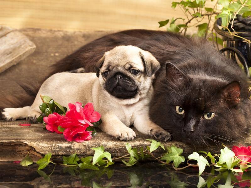 Ein großer Freund bietet sogar noch mehr Schutz – Bild: Shutterstock / Liliya Kulianionak