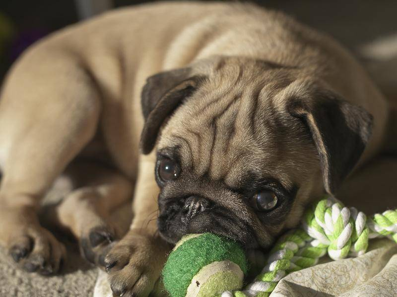 """""""Wer spielt mit mir?"""" – Bild: Shutterstock / Nature Art"""