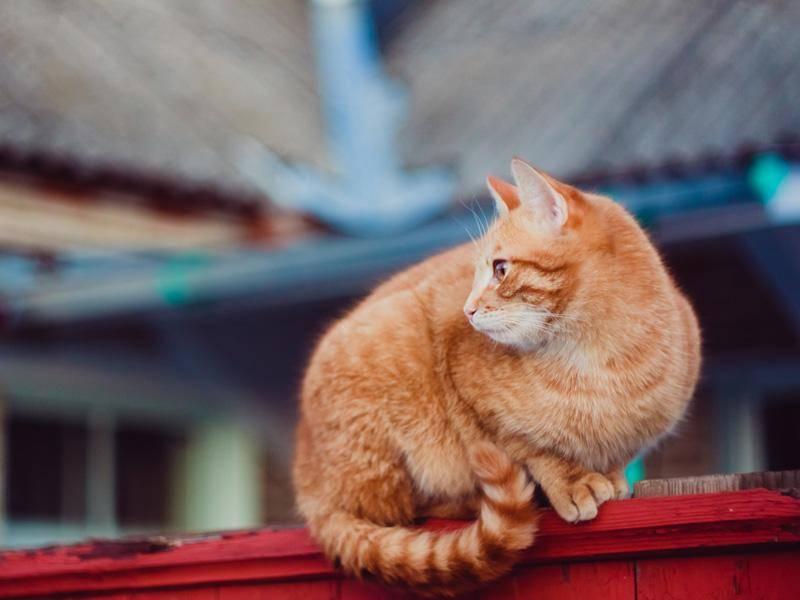 Denn Hauskatzen sind oft richtige kleine Abenteurer – Bild: Shutterstock / Grisha Bruev