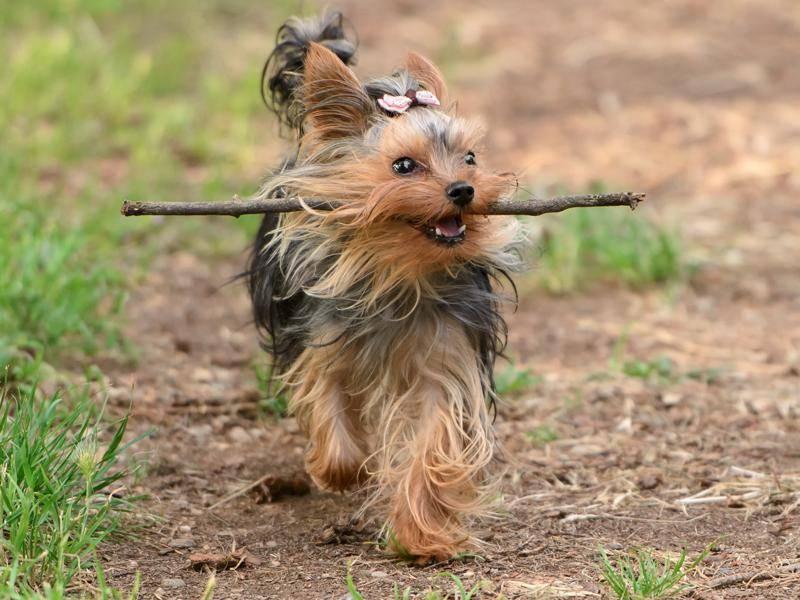 Spielen muss natürlich aber trotzdem sein – Bild: Shutterstock / tsik